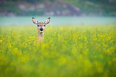 Deer whispering in Porkkala Finland | Photo by Konsta Punkka