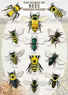 The World of Bees | PuzzleWarehouse.com