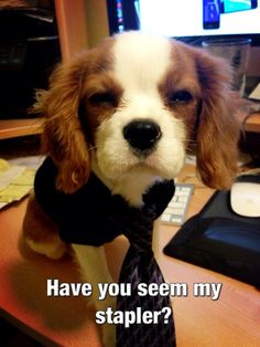 Office Dog: Have you seen my stapler?
