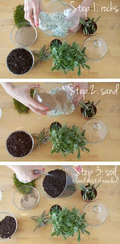 Succulent Garden DIY | All Sorts of Pretty