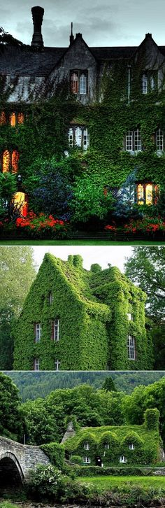 Incredible Ivy-Covered Houses. I'm doing this to my house.  It takes a long time : )