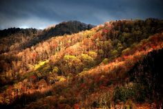 Smoky Mountain National Park, Gatlinburg, Tennessee...Yes, it really looks like this!