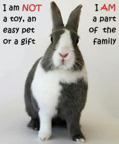 My rabbits are part of my family!
