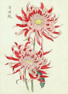 Source: stilllifequickheart - http://stilllifequickheart.tumblr.com/post/38320880841/keika-hasegawa-chrysanthemum-1893