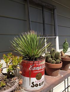 WHEAT PENNY VINTAGE: A simple repurpose...Plant a cactus in an old popcorn tin