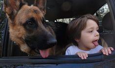 Doppelganger_dogs