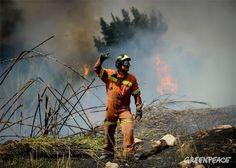 Más presupuestos y menos demagogia contra los incendios forestales | Greenpeace España