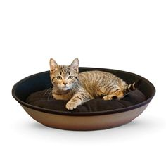 KH Pet Products Mod Sleeper Cat Bed Small Gray Black 185 x 14 * Details can be found by clicking on the image. (This is an affiliate link) Heated Cat Bed, Bed Images, Cat Supplies, Pet Beds, Your Pet, Medium, Pet Products, Ebay, Touch