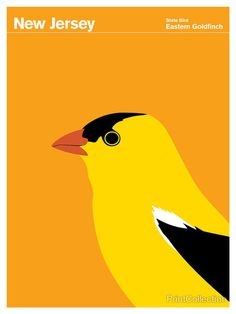 New Jersey Eastern Goldfinch