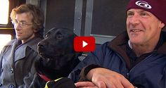 LABtv Video: Black Labrador Rides Bus to the Park All By Herself | It's a Lab Thing