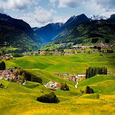 Asiago (Vicenza), Veneto, Italy - The meadows of the plateau of Asiago, in spring, are full of flowers tarasso that highlight the gentle slopes and small valleys.