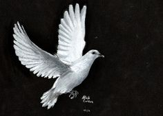 Image result for flying dove pencil drawing