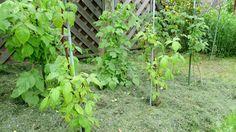 Jak zajistit rostlinám potřebnou vláhu bez nákupu mulčovací kůry  1