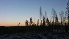 Metsä. Joulukuu