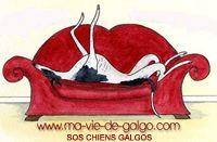 sos chiens galgos est une: Associations de sauvetage et protection des Lévriers d' Espagne et naturellement de tous les autres chiens qui ont besoin d' aides qu'ils soient en France, en Roumanie...Vous nous retrouverez sur notre blog http://www.ma-vie-de-galgo.com mail galgosetgalgas@yahoo.fr