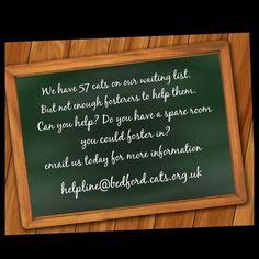 >..< FOSTERERS NEEDED  #CatFostering #Volunteer #DoingItForTheCats #Bedford