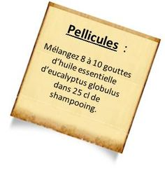 tratier les pellicules avec eucalyptus globulus Lhuile essentielle dEucalyptus globulus : Contre les affections respiratoires et les douleur...