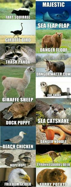 Alternate names for animals - Funny memes hilarious -You can find Memes and more on our website.Alternate names for animals - Funny memes hilarious - Funny Animal Jokes, Cute Funny Animals, Funny Animal Pictures, Funny Cute, Funny Animal Sayings, Hilarious Pictures, Funny Happy, Animal Pics, Funny Chicken Pictures