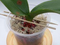 ПОДПОРКИ, корзинки, блоки и другие изобретения для орхидей