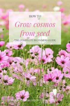 How to grow cosmos from seed. The complete how to guide. Cosmos Plant, Cosmos Flowers, Blooming Flowers, Cut Flower Garden, Flower Farm, Flower Gardening, Gardening Tips, Growing Flowers, Planting Flowers