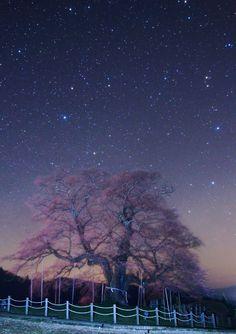 広島・尾道の夜桜の画像、星と桜がベストマッチ!