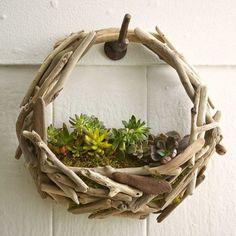 Driftwood Succulent Wall Garden | VivaTerra