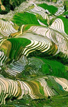 Vietnam Terraced rice field in water season in Mu Cang Chai, Yen Bai province, Vietnam | 17 Unbelivably Photos Of Rice Fields. Stunning No. #15