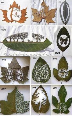 Kirigami uses traditional paper cutting to carve designs into leaves Leaf Crafts, Diy And Crafts, Arts And Crafts, Paper Crafts, Kirigami, Art Et Nature, Nature Crafts, Idee Diy, Leaf Art
