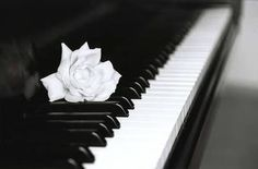 This black and white piano is a great example of extreme contrast. This composition adds more contrast with a white flower on the keys and good example of a man-made black and white photo.