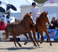 Elisa Wallace won the Extreme Mustang Makeover and then made a successful comeback to the upper levels of eventing.