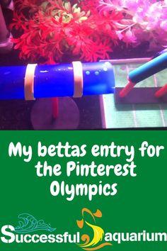 #betta #SuccessfulAquarium Betta Fish, Olympics, Aquarium, Insects, Success, Sea, Animal, Life, Goldfish Bowl