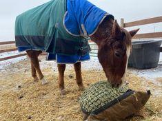 Cozy Calvin sure does enjoy his #HayPillow! 🐴❤️ #slowfeedhaynet #horsehay #slowfeedhaybag #haynet #haybag Horse Hay, Slow Feeder, Cozy, Mini, Bags, Animals, Handbags, Animales, Animaux