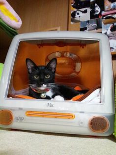 Cat in retro iMac #animals #cute #geek #nerd