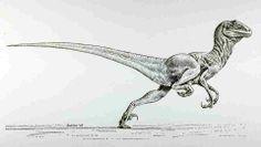 A revolutionary depiction of an agile Deinonychus by Robert T Bakker