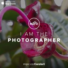 miPic is a social marketplace for artists & photographers to print, share & sell their pictures as beautiful art, fashion and lifestyle products Cool Art, App, Gallery, Awesome, Artist, Flowers, Check, Pictures, Fotografia