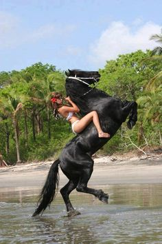 Mission: To Protect & Promote he KFPS Friesian Horse in North America Fhana Fhana Most Beautiful Horses, All The Pretty Horses, Animals Beautiful, Bareback Riding, Horse Riding, Cute Horses, Horse Love, Horse Girl Photography, Majestic Horse