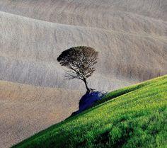 Tree. (© Marek Andrzejewski, Poland, 2013 Sony World Photography Awards)