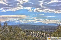 Olivos de la comarca de la Loma con Sierra Mágina al fondo