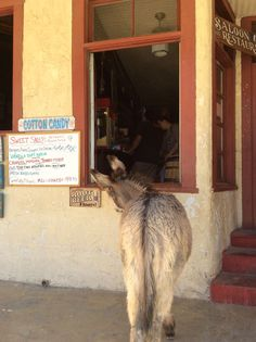I would love to try one a Root Beer Float. Oatman AZ