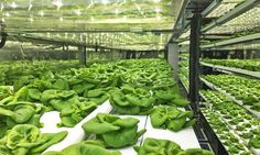 Local Roots' shipping container farms can be placed anywhere to grow as much local produce as could be grown on around five acres with 97 percent less water.