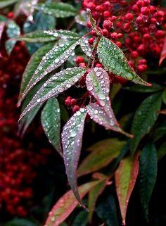 46 Ideas Nature Flowers Photographs Dew Drops For 2019 Dew Drops, Rain Drops, Gota A Gota, I Love Rain, Fotografia Macro, Morning Dew, Water Droplets, Macro Photography, Rainy Days