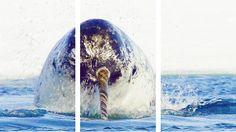 Narwhal in the ocean. Lol