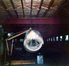 Jaws 2, Jaws Movie, Jaws Bruce, Classic Films, Cool Stuff, Hulk, Movies, Lunch, Films