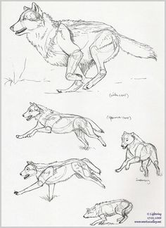 Wolf pen-sketches by blayrd on DeviantArt - drawings_pintous Wolf Sketch, Pen Sketch, Drawing Sketches, Drawing Poses, Drawing Ideas, Sketching, Animal Sketches, Animal Drawings, Wolf Drawings
