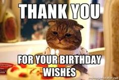 16d2b810d8979e5ad9f6b14aeac5ae4f birthday pins birthday wishes thank you meme thank you for your birthday wishes birthday cat