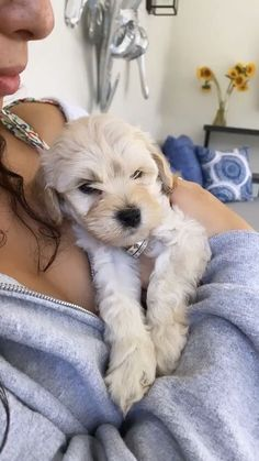Pets 3, Cute Dogs And Puppies, Doggies, Cute Creatures, Cute Baby Animals, Bacardi, Fur Babies, Dog Cat, Kittens