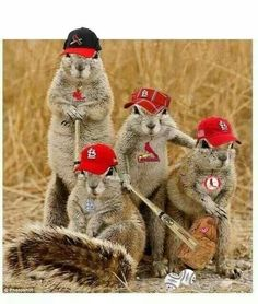 The Rally Squirrels are ready ... STL CARDINALS :)