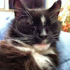 Missing cat, Naugatuck: Since 9/5/2013.