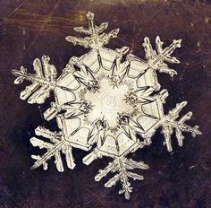 snowflakes are amazing! konfetti.tumblr.com