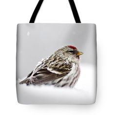"""Snowy Common Redpoll Tote Bag by Christina Rollo (18"""" x 18"""").  The tote bag is machine washable, available in three different sizes, and includes a black strap for easy carrying on your shoulder.  All totes are available for worldwide shipping and include a money-back guarantee."""